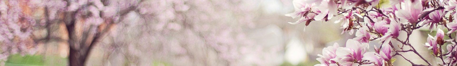 traumasensibles Yoga Magnolie